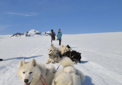 Hundeschlittentouren in Island