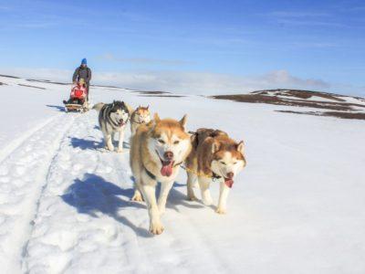 Hundeschlittentour am Myvatn