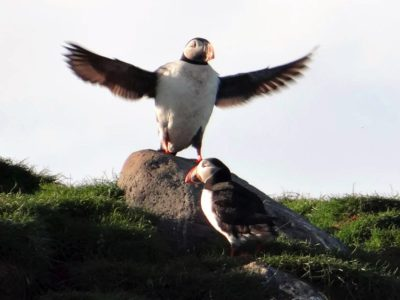 Papageitaucherbeobachtung ab Grundarfjörður
