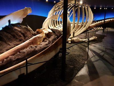 Walmuseum in Húsavík