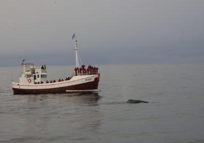 Bootstouren auf Island